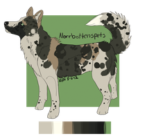 Norrbottenspets Design Trade by SpoonLake