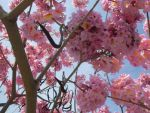 flowering tree by Zbee8