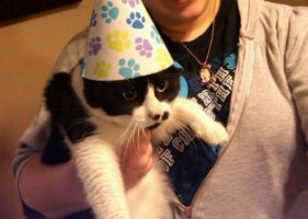 Kitty Cat Party Hat by lac1483