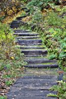 The Autumnal Stairs by Bluebuterfly72