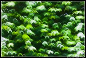 Forests XII by aFeinPhoto-com