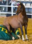 STOCK - 2014 Total Equine Expo-122 by fillyrox