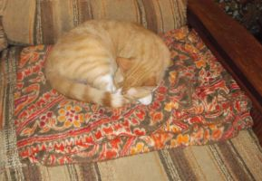 On the couch (3): Butterscotch aka Scotty by MystMoonstruck