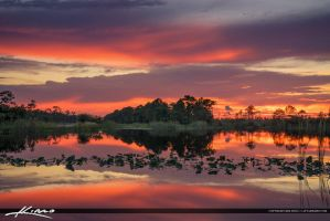 Martin-County-Florida-Lake-and-Reflection by CaptainKimo