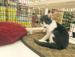 petsuper market cat  of the day 3 by michelous