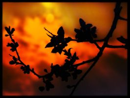 Orange Sky by Lylly55