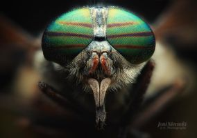 Striped Horsefly Color by Nitrok