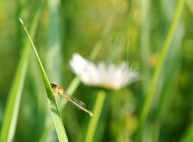 Damselfly by Elillustrated