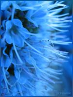 Blue On Blue by shutterbugmom