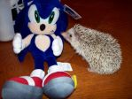 Sonic, Meet Sonic by SonicMaster23