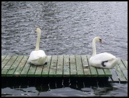 Swans: Chilling Time by xrealisticx