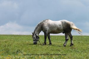 Horse by Galloping-Textures