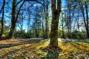 Forest 2 (HDR) by PascalSchwab