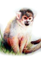 Squirrel Monkey by ARRIAthelion