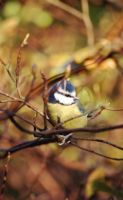 Blue by FayeJ1234
