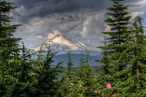 Mt Hood from our Special Spot by danporter