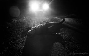 roadkill by SaintSazzle