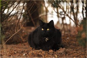 Cat without hat.. by Pebels