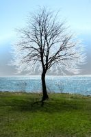 Etherial Tree by demonsDad