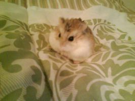 Hamster On My Bed by BethaLim