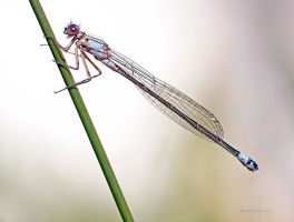 2010 DAMSELFLY by Sandy33311