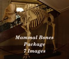 mammal skull package by bookscorpion
