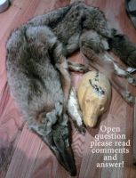 Open Question for dA Taxidermists- normal and soft by ksheridan