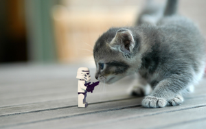 stormtrooper vs. cat by Kveldsvanger