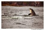 Playful Dolphins II by TVD-Photography