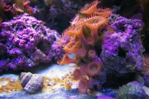 Anemone by OverStocked
