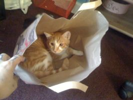 Paper Bagger by lovechairmanmeow