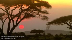 Serengeti Sunset by Aiwemor