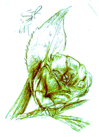 Rose Drawing by PukingRainbow