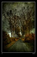 Autumn Road by Riffo