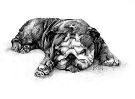 Bulldog by Firera