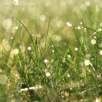 High on morning dew II by Haen9
