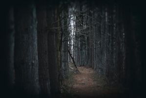 Into The Woods by BlackRoomPhoto