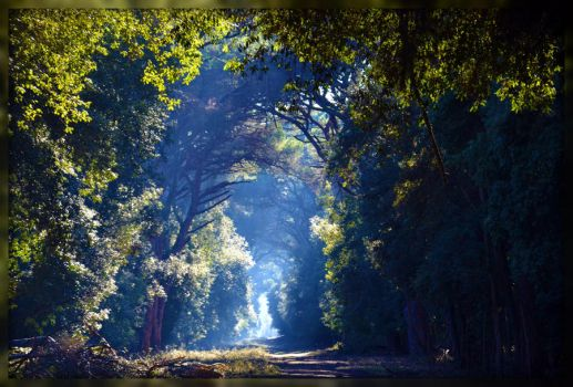 Path to the light by Gaart