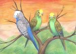 Budgerigards by Rufina-Tomoyo