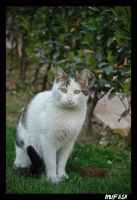 CAT_7 by mufash