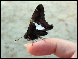 the butterfly on my finger by fluffylink