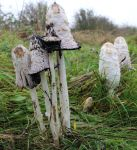 Decaying Mushrooms 4 by fuguestock