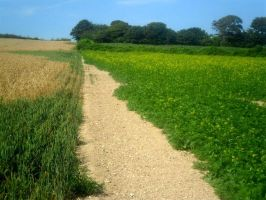 South Downs walk, Sussex, Uk by sussexjohn