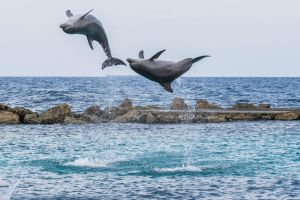 Dolphins... Jumping really high! by ssabbath