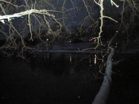 Branches Protrude at the Lake in Winter at Night by Zer0II