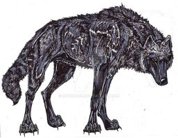 Black-Phase Wolf by MWRoach