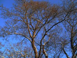 Branches by EriciusLux
