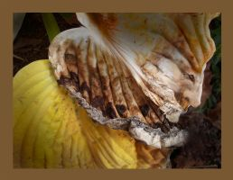 Halloween for a Dying Hosta by richardcgreen