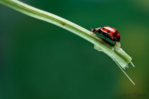 Lady_bug_1 by LeronMasoN