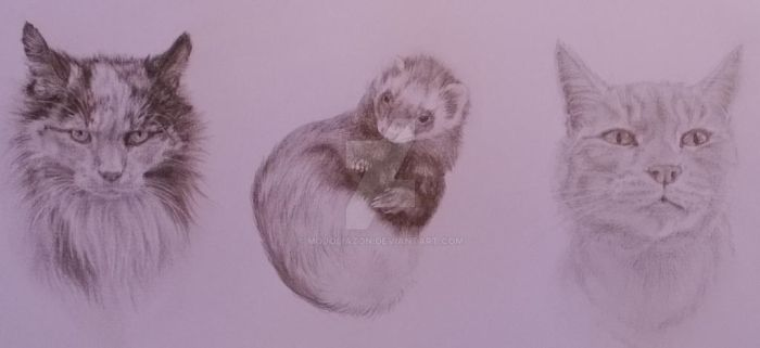 Triple Pet Portrait - Cat, Ferret, Cat by MojoLiazon